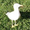 Foto del perfil de Verlin