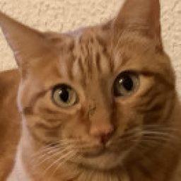 Foto del perfil de Misi